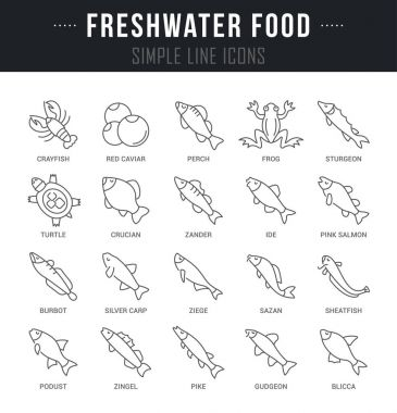 Set Vector Line Icons of Freshwater Food