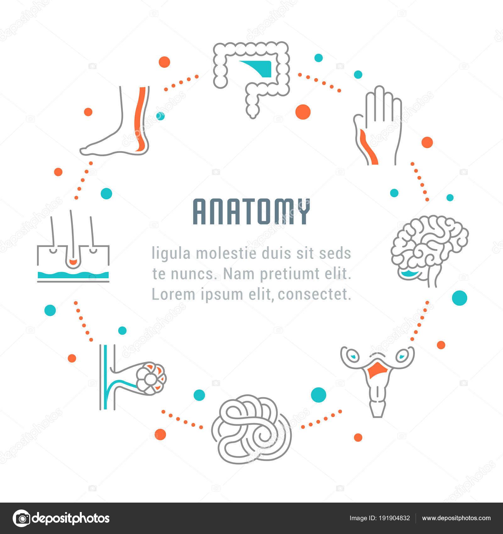 Banner de web y página de inicio de la anatomía — Archivo Imágenes ...