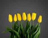 Fényképek A szürke háttér sárga tulipánok
