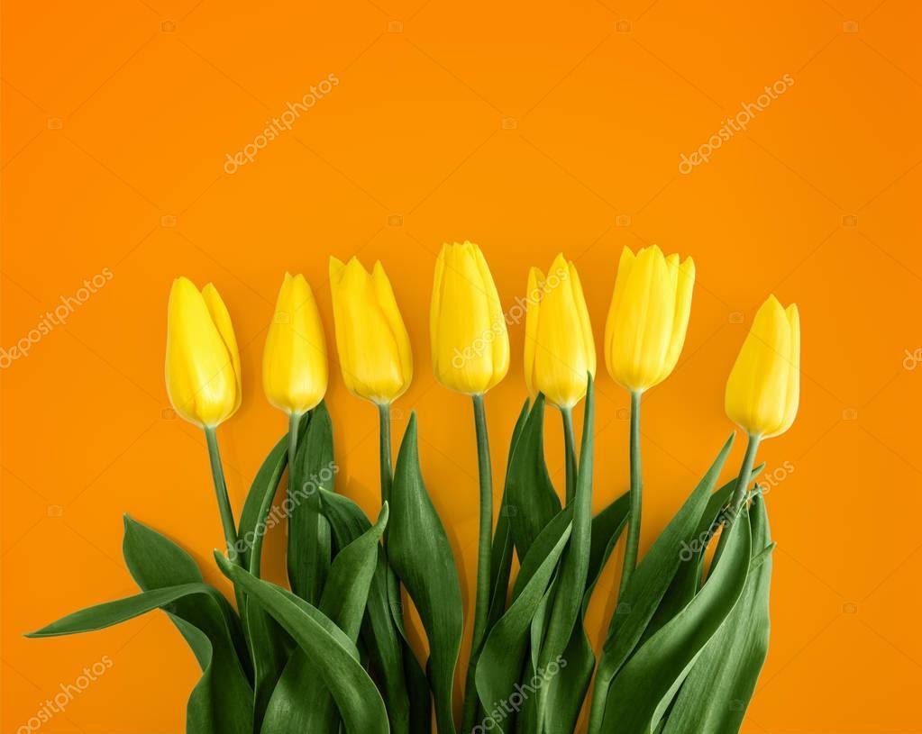 Yellow tulips on Orange background