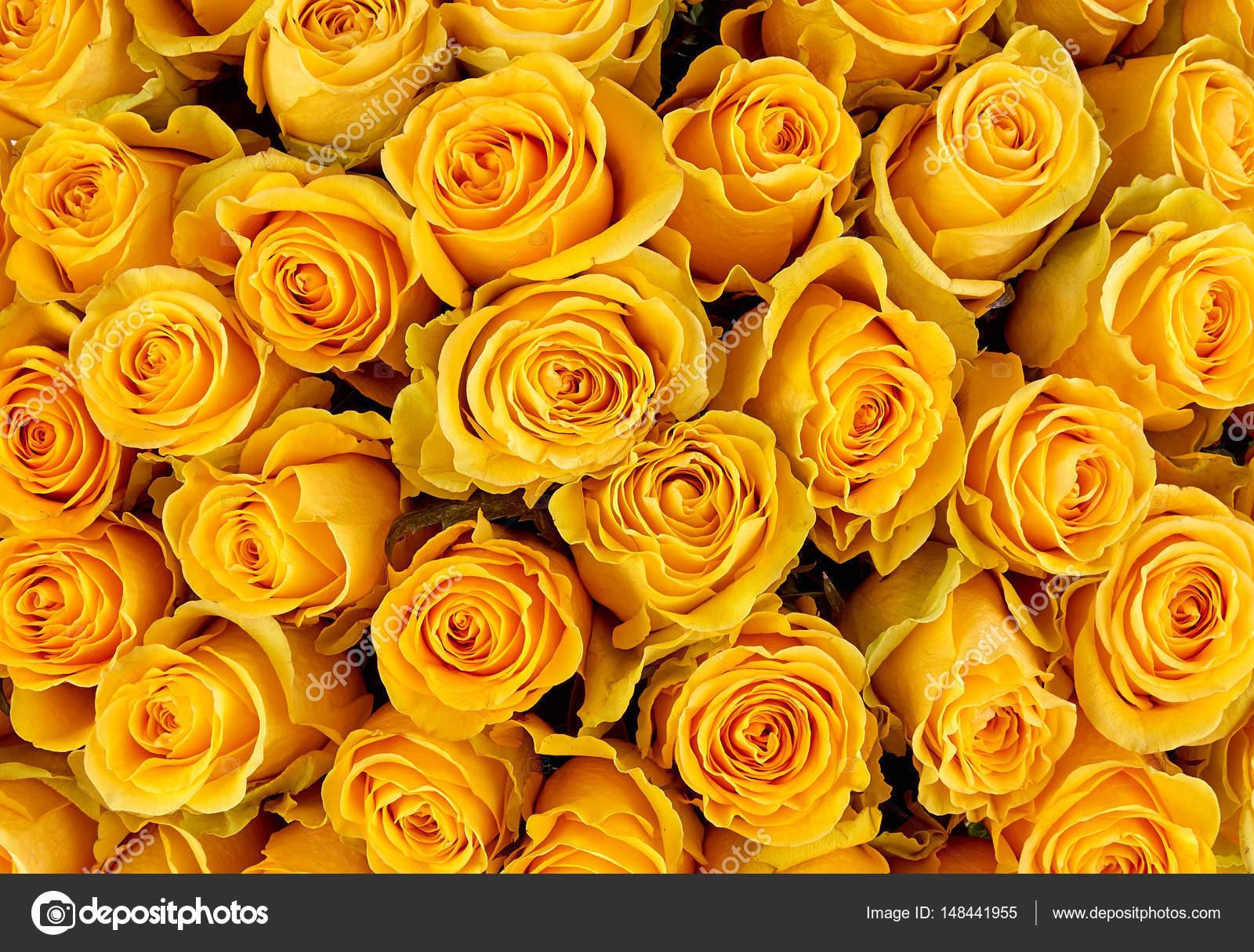 rose hintergrund bunte rosen wand hintergrund stockfoto baranov evgenii 148441955. Black Bedroom Furniture Sets. Home Design Ideas