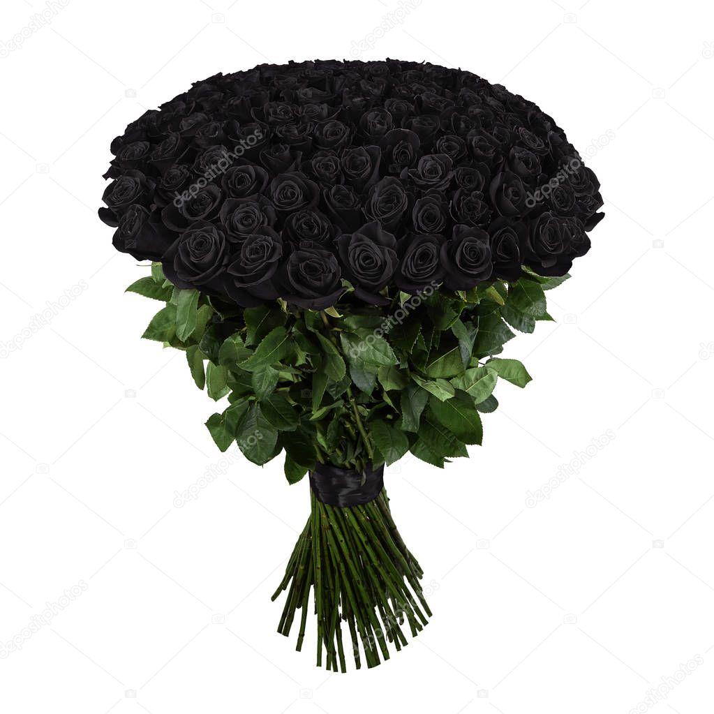 Black rose. Isolated large bouquet of 101 rose on white