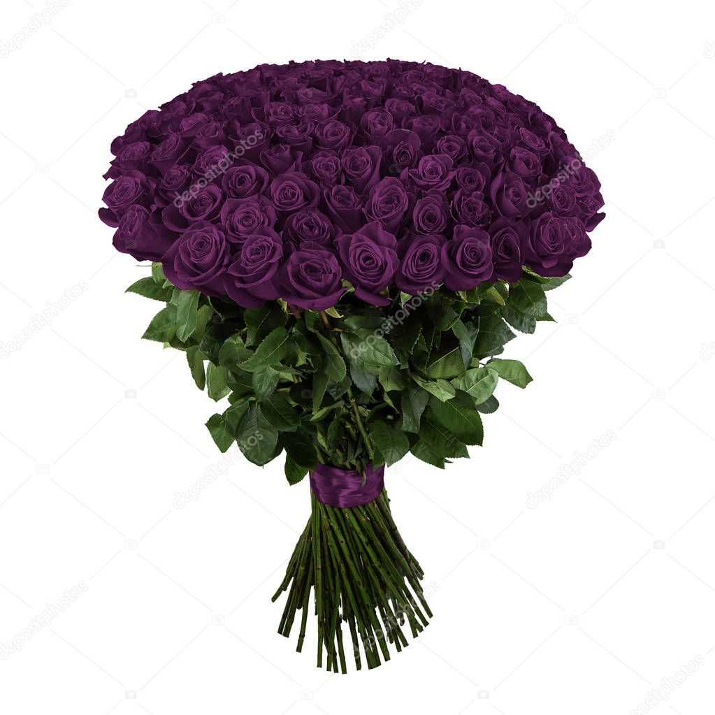Violet rose. Isolated large bouquet of 101 rose on white