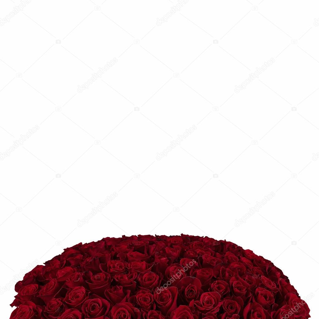 Red rose. Isolated large bouquet of 101 red rose on white