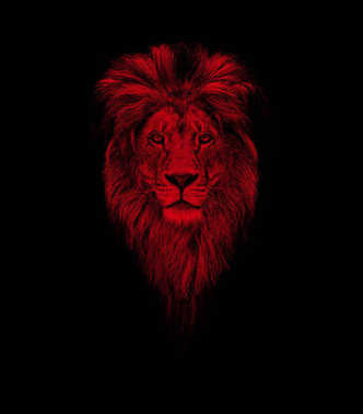 Portrait of a Beautiful lion, lion in dark. Portrait of a leader