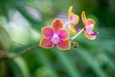 Fotografie Closeup orchids