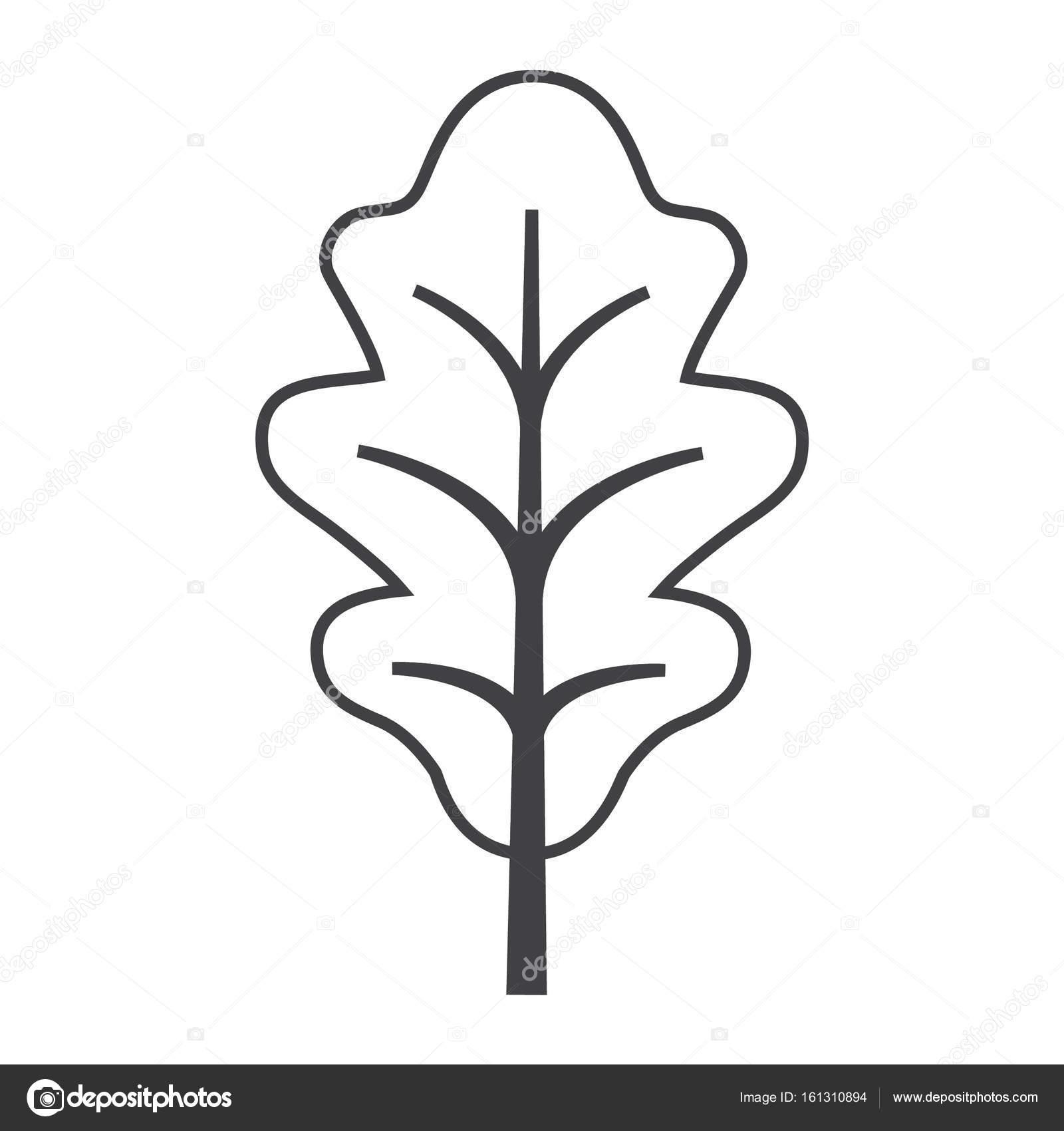 Wyniki Szukania W Grafice Google Dla Https St3 Depositphotos Com 3146911 16131 V 1600 Depositphotos 161310894 Stock Illustration Thin Line Oak Leaf Icon Santa