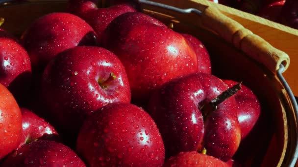 The fresh harvest of organic apples outdoors in dappled sunlight