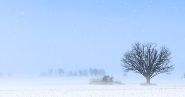 4k ultrahd einsamer Baum in einer Winterlandschaft