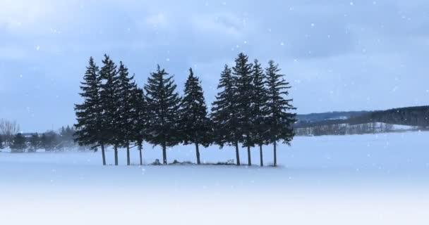 4 k Ultrahd stálezelených grove v zasněžené krajině