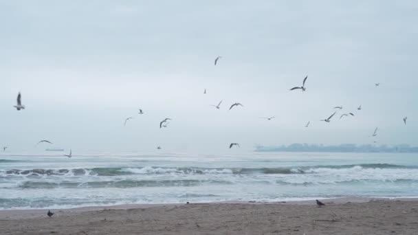 Vögel Meer Winter, Möwen Meer