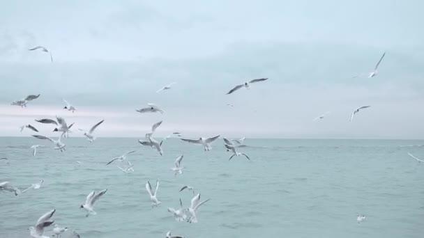ptáci moře zima, racci oceán