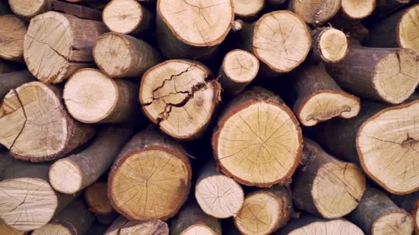 kulaté dřevo textury pozadí. Hromada klád. Místo těžby dřeva. pokácené kmeny stromů. dřevo na grilování. krb nebo kotel.