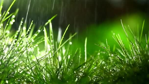jarní déšť padá na mladé zelené traviny.green rozmazané pozadí. kapky vody padají na holé rostliny. Zavřít. bokeh a rozmazané pozadí. kapky svítí na sluneční paprsky. zalévání trávníku. růst
