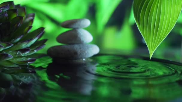 Concept: relaxation, wellness, body care, spa, aromatherapy. Macro succulents and stones are reflected in the water. drops of water fall into the water. Slow motion. On a green nature background