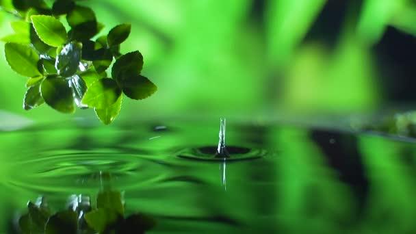 Zavřít. svěží zelený list s kapkou dešťové vody nad vodou, příroda list větev scéna pro relaxaci s koncepcí zvlněné kapky, zpomalený záběr. Zelené pozadí. Kopírovat prostor pro text