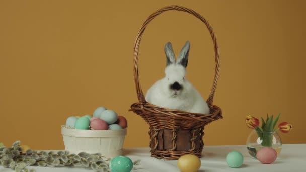 Roztomilý světle bílý králík na žlutém pozadí s vejci na stole. Králík v košíku