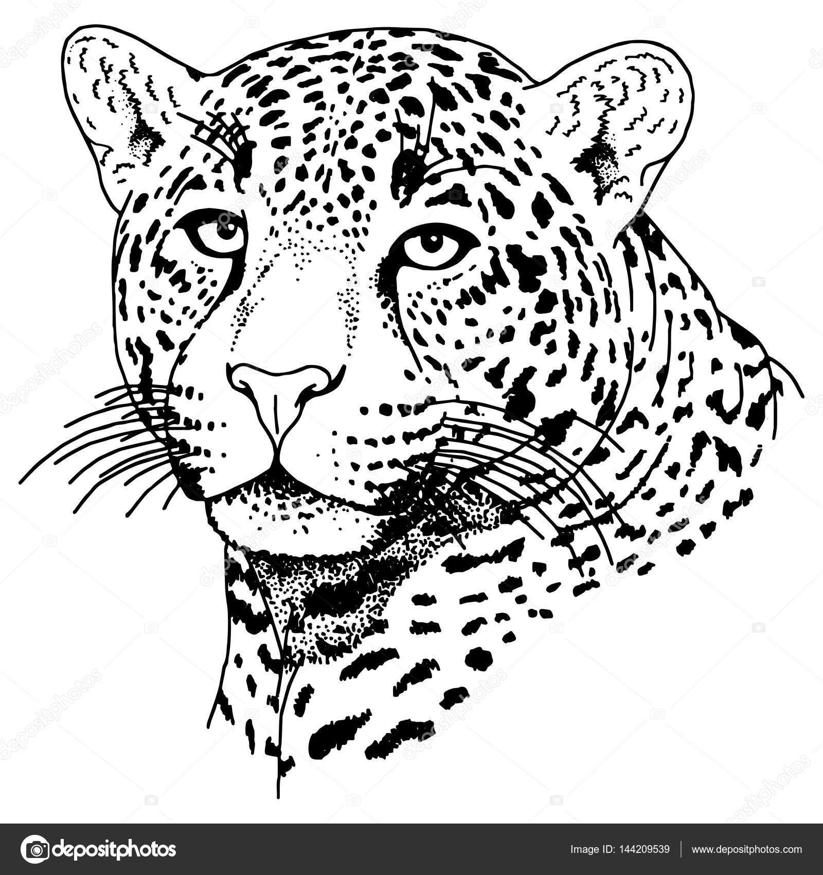 Tatuaje de cara de leopardo, Vector Ilustración, impresión — Vector ...