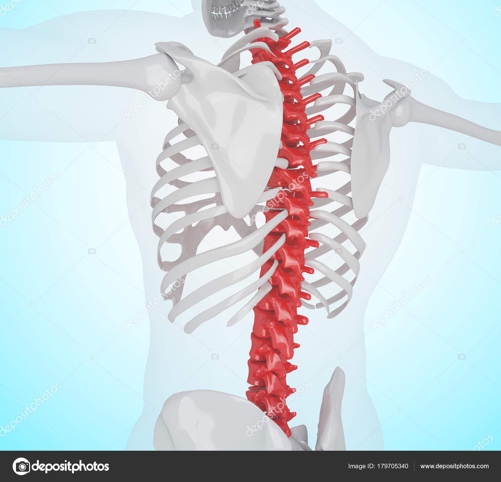 Ilustración 3D del esqueleto humano dolor de espalda — Foto de stock ...