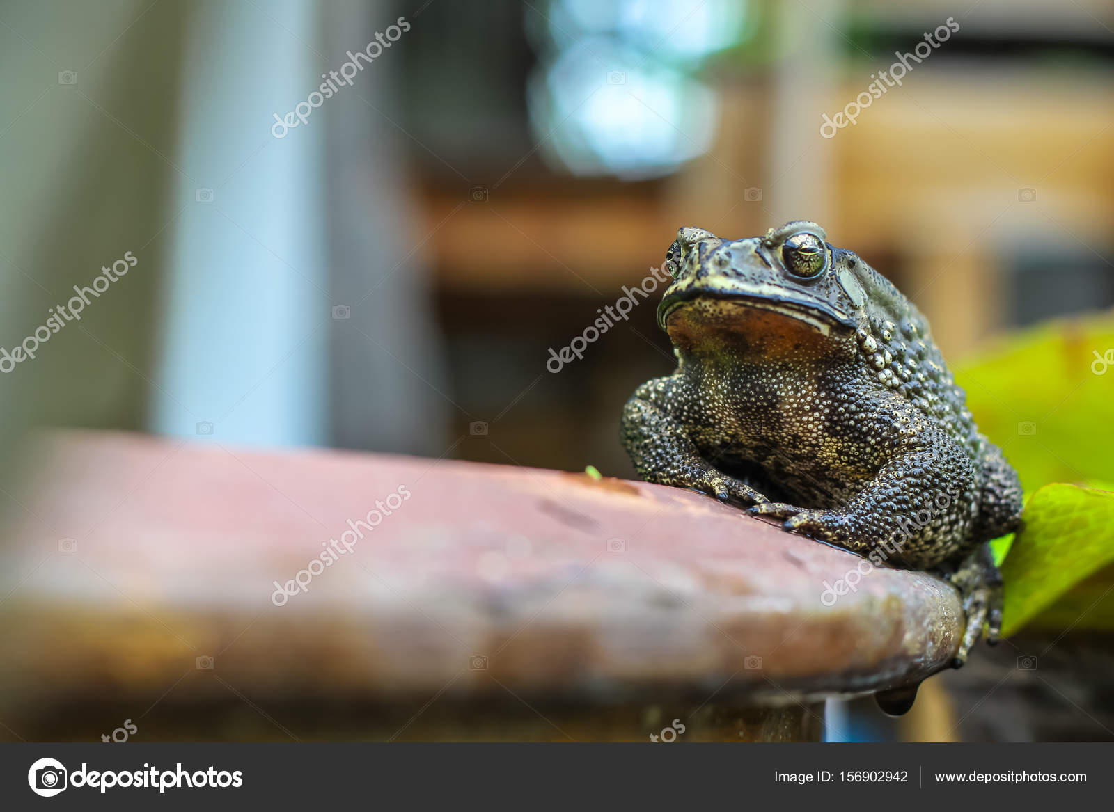 Big Toad On The Edge Of The Pot In The Garden. U2014 Photo By Iceindymusic