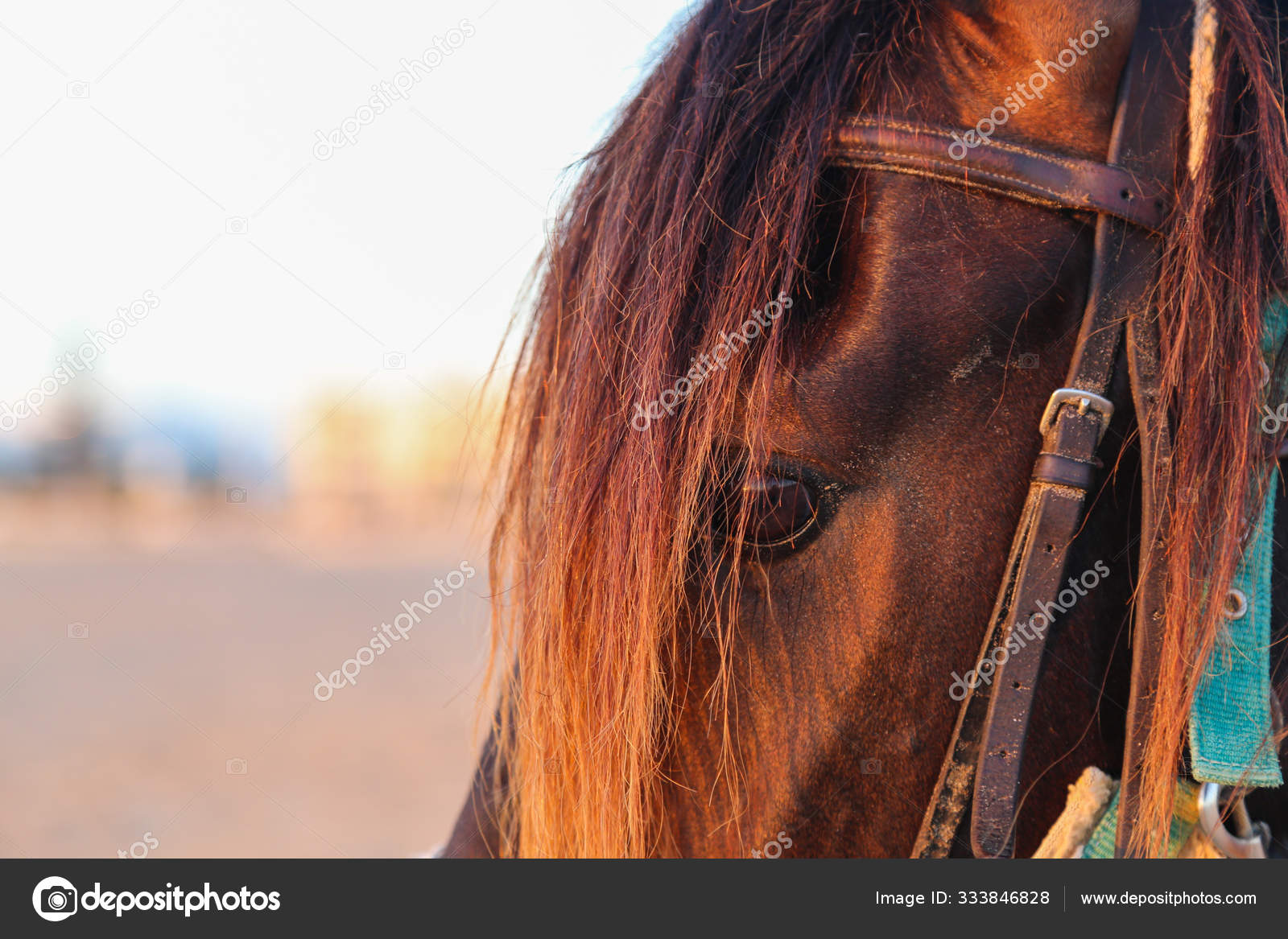 Beautiful Horse Closeup At Sunset Stock Photo C One100 Yandex Ru 333846828