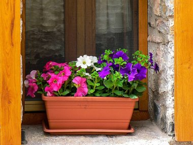flowers on a wooden window and curtains in the background