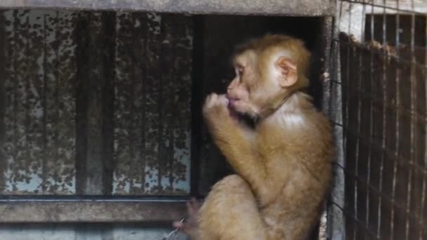 Small Monkey in the cage  in Phuket