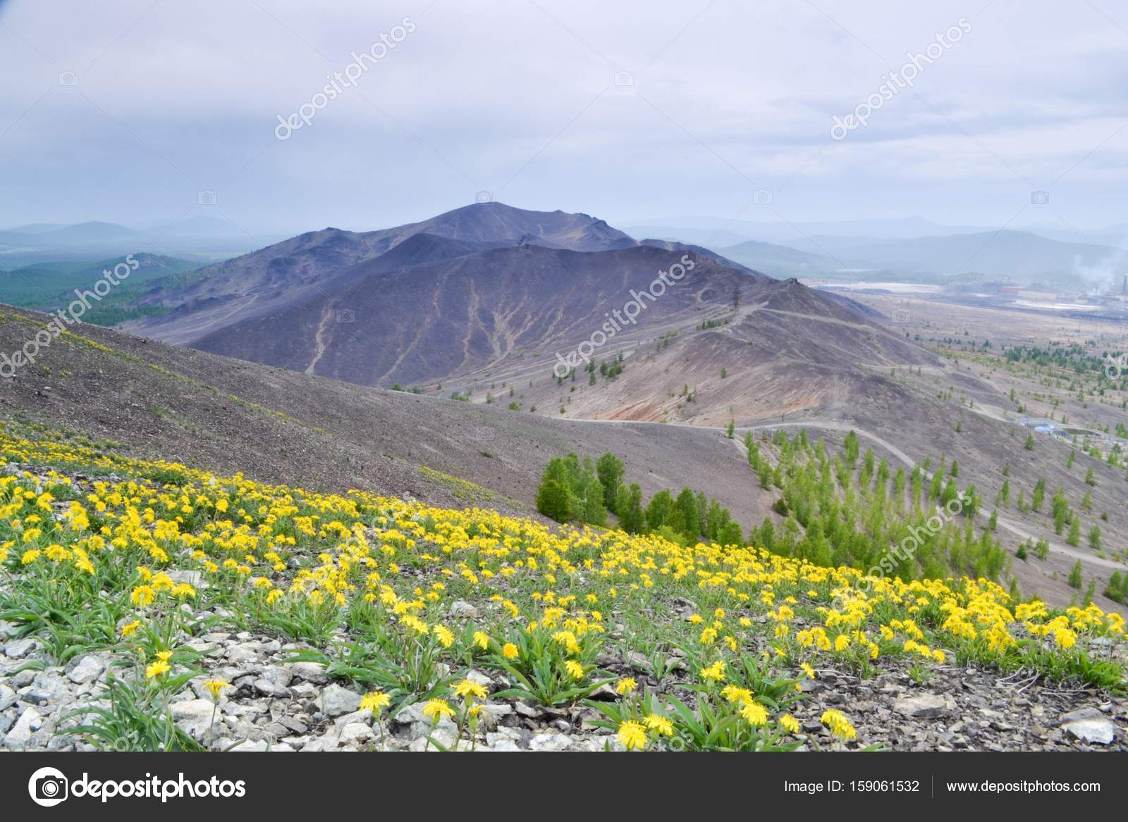 Yellow Mountain Flowers On The Slope Of The Mountains Stock Photo