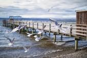 Fotografie Dampfersteg in Diessen am Ammersee, Bayern, mit fliegenden Möwen