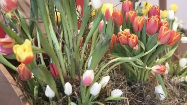 Krásné tulipány rostou v hotelu