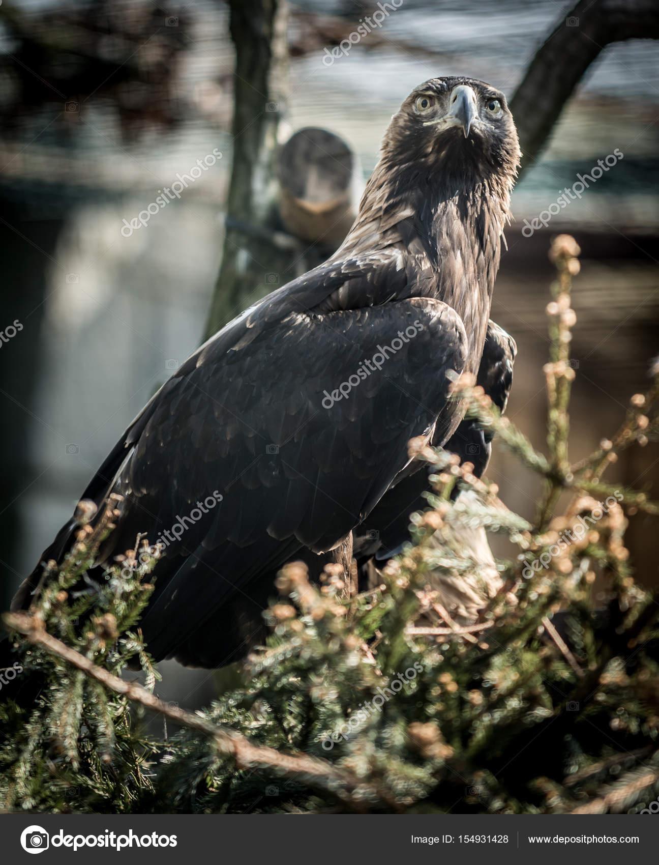 μαύρο τύπο με τεράστιο πουλί