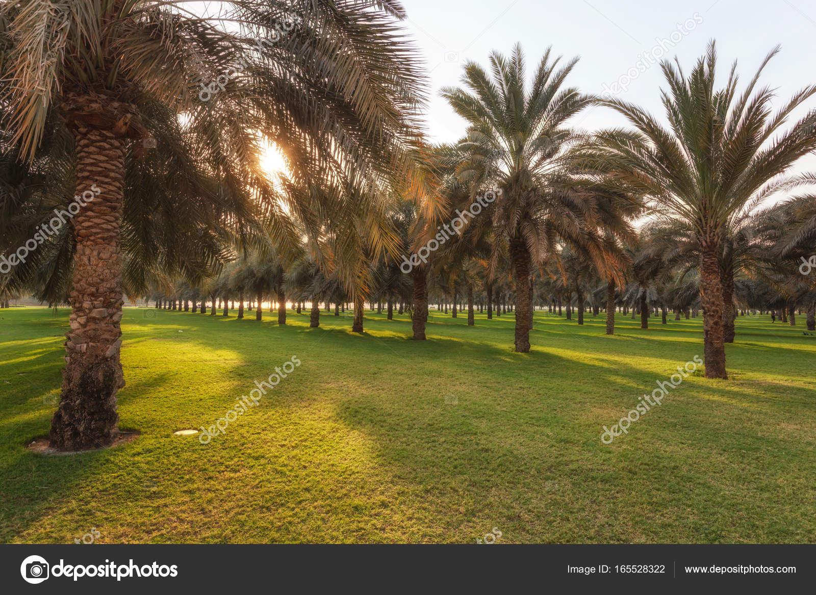 green garden in Dubai — Stock Photo © sakhanphotography #165528322