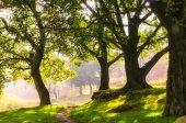 Fotografia Percorso passando attraverso lussureggianti foreste con retroilluminazione