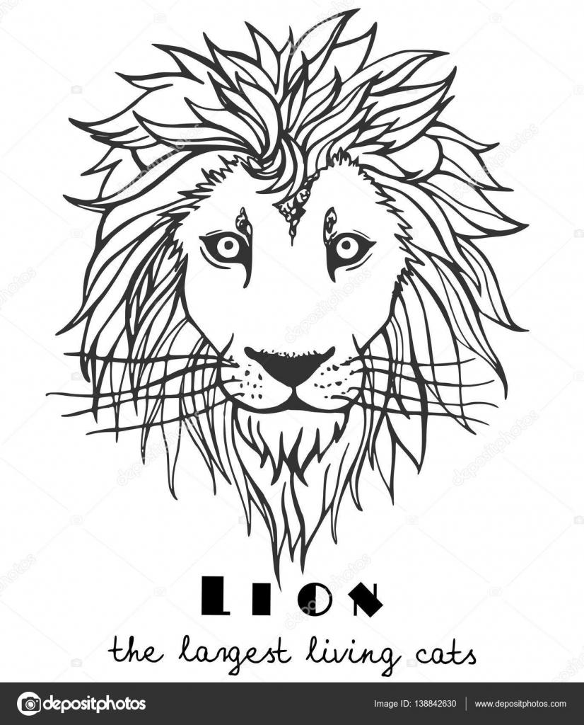 Blanco y negro decorativo León dibujado a mano — Vector de stock ...