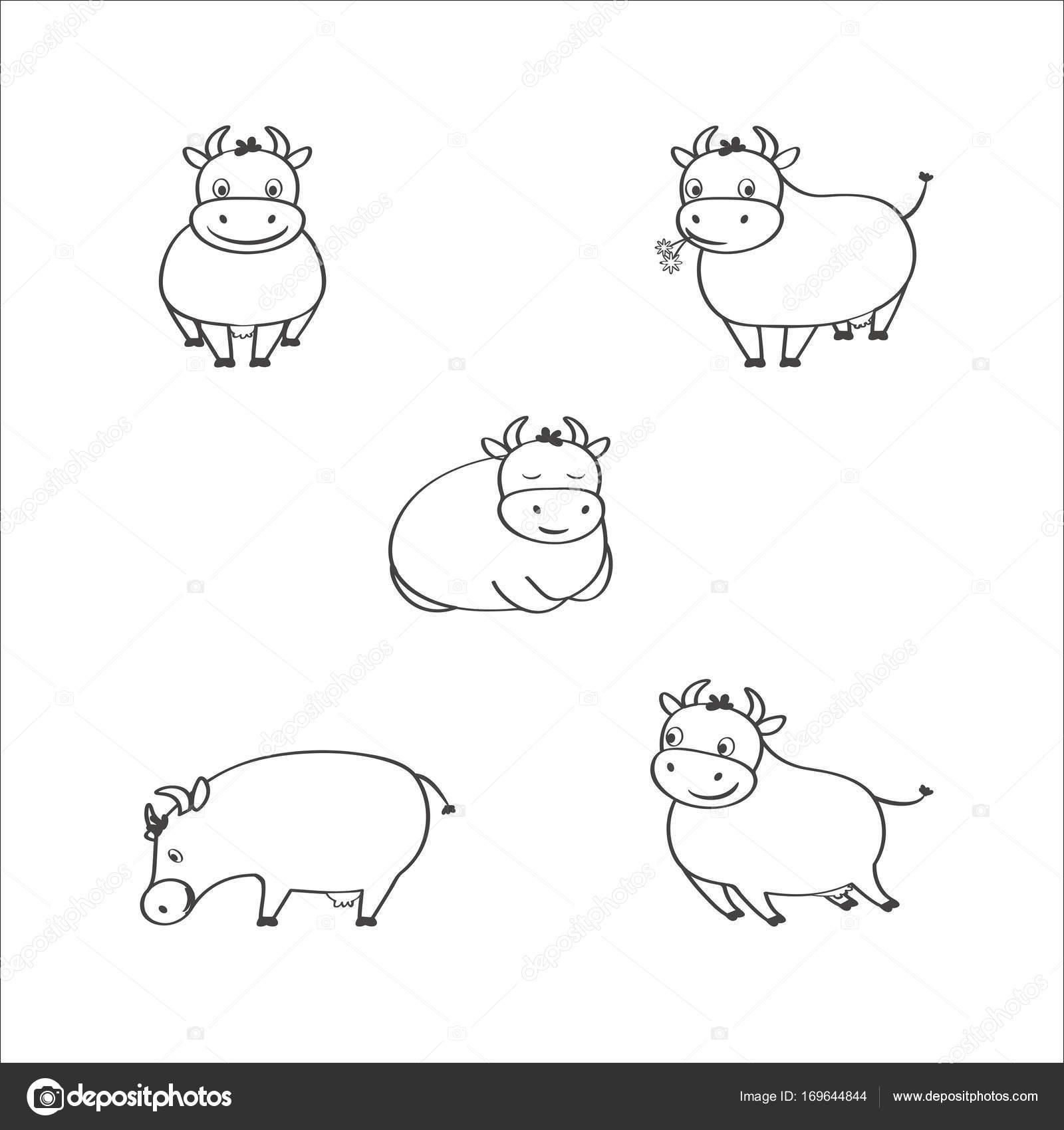 Satz von fünf junge süße Kuh-Bilder in verschiedenen Positionen ...