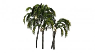 Queen palm on a white background