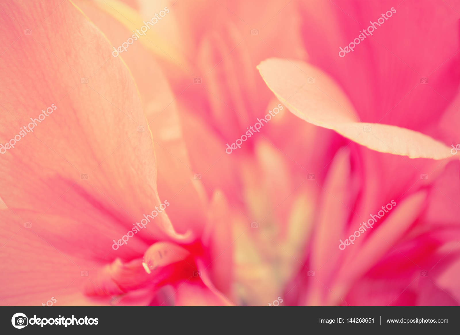 Pink Flower Petals Abstract Nature Background Stock Photo