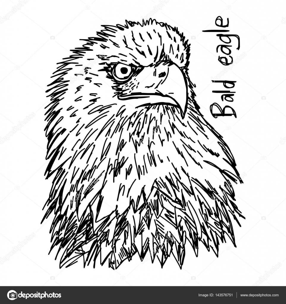 cabeza de águila calva - vector ilustración bosquejo dibujado con ...