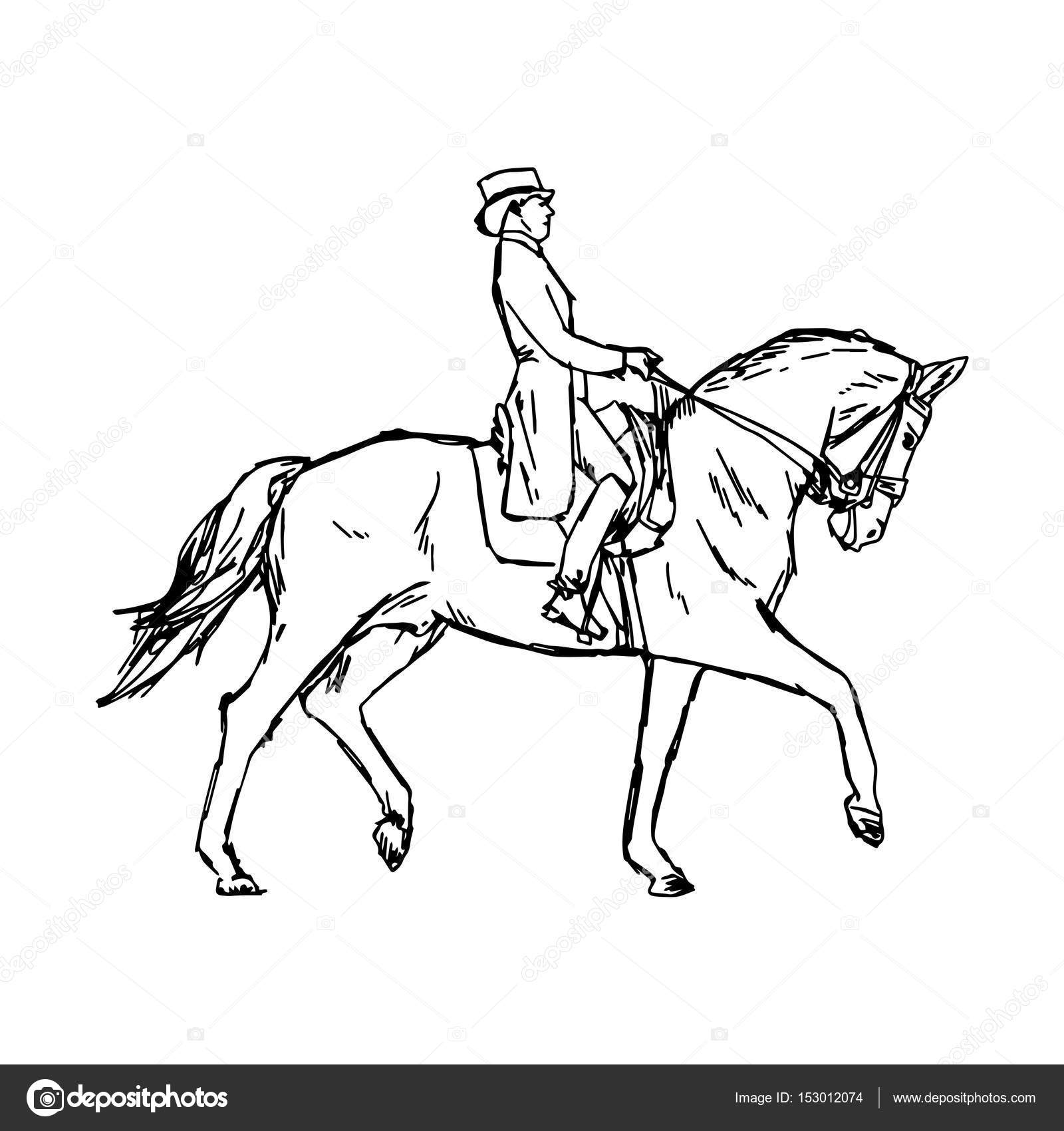 Young Rider Man On Horse At Dressage Competition Equestrian Dressage Vector Illustration Sketch Hand Drawn With Black Lines Isolated On White Background Stock Vector C A3701027d 153012074