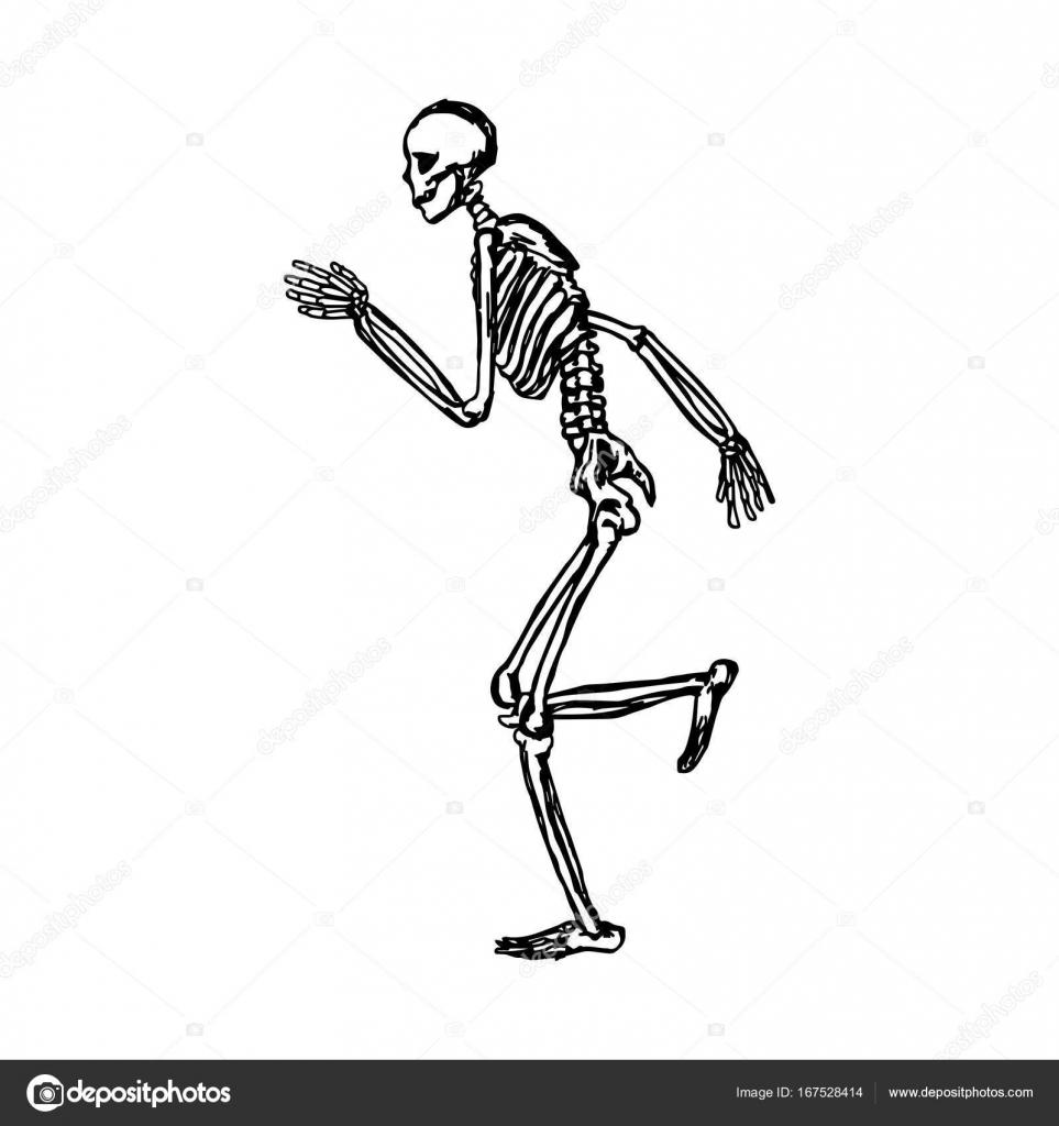 esqueleto humano corriendo mano de dibujo vector ilustración ...