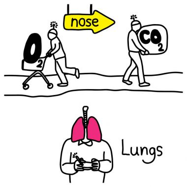 metaphor function of lungs to exchange Carbon dioxide and Oxygen while breathing in and out vector illustration sketch hand drawn with black lines, isolated on white background. Education Medical concept