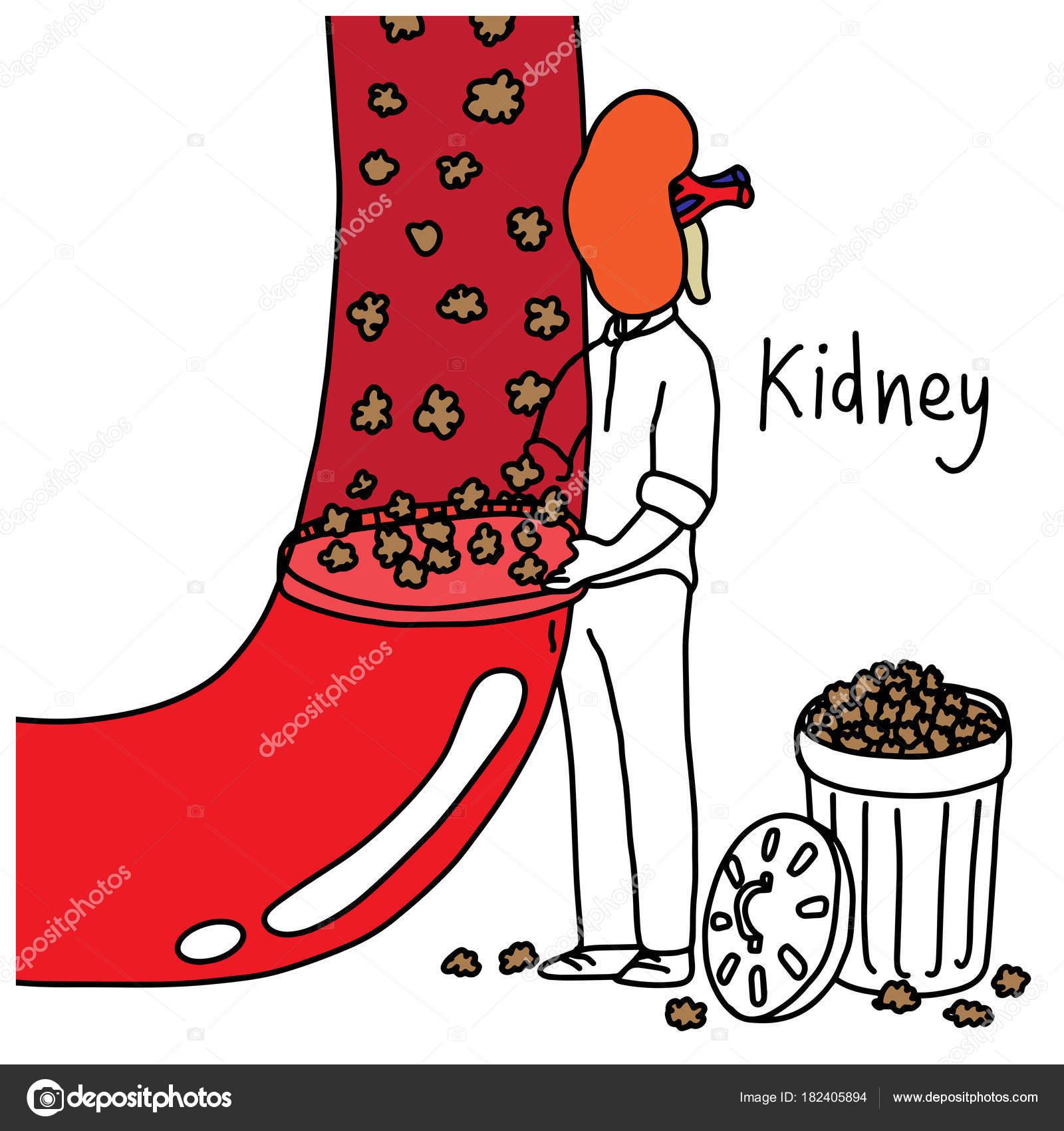 Funktion der Metapher des menschlichen Nieren Filtern verschwendet ...