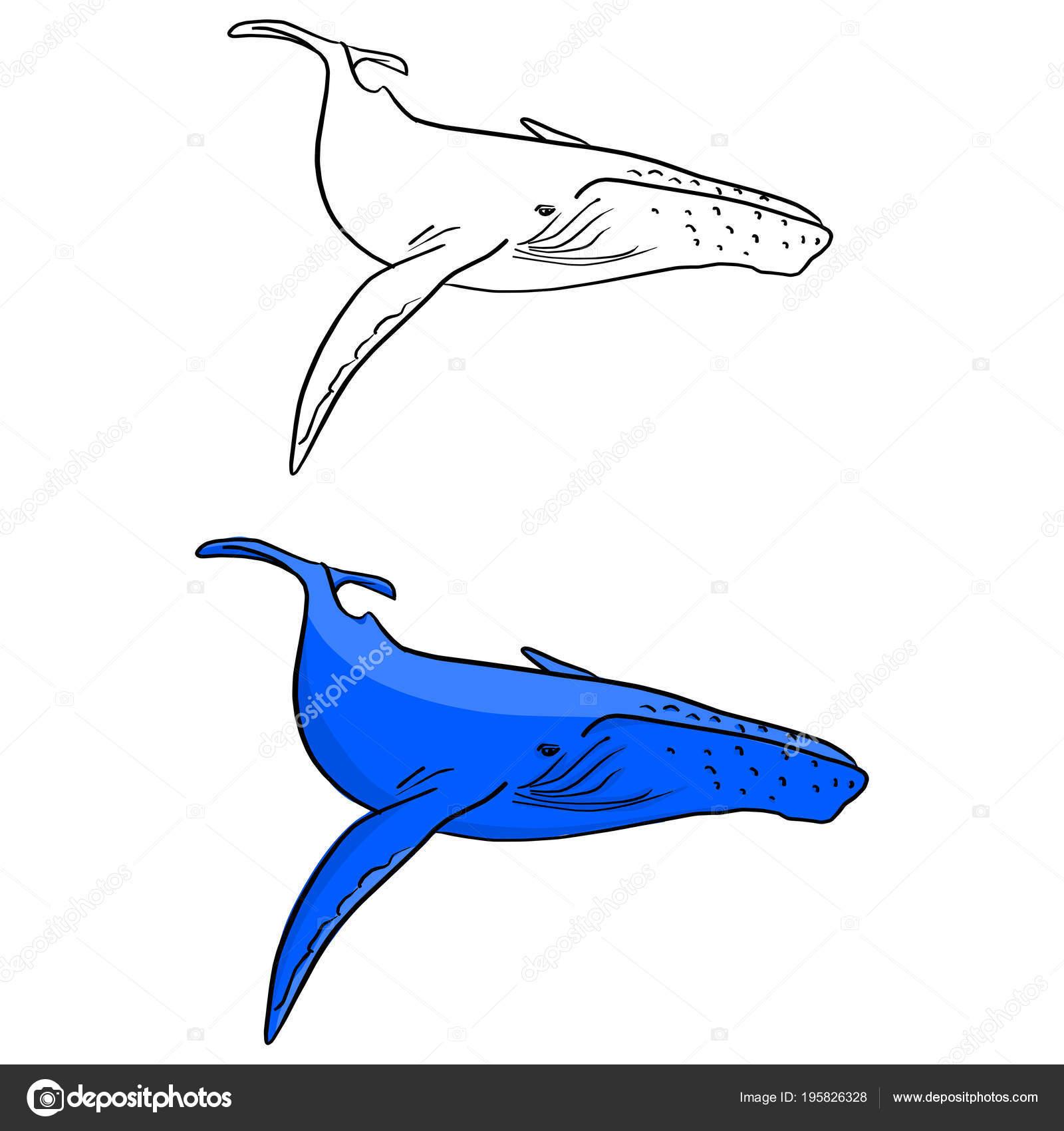 Ballena Azul Vector Ilustración Dibujo Doodle Dibujado Mano Con ...