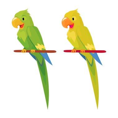 two parrot  illustration