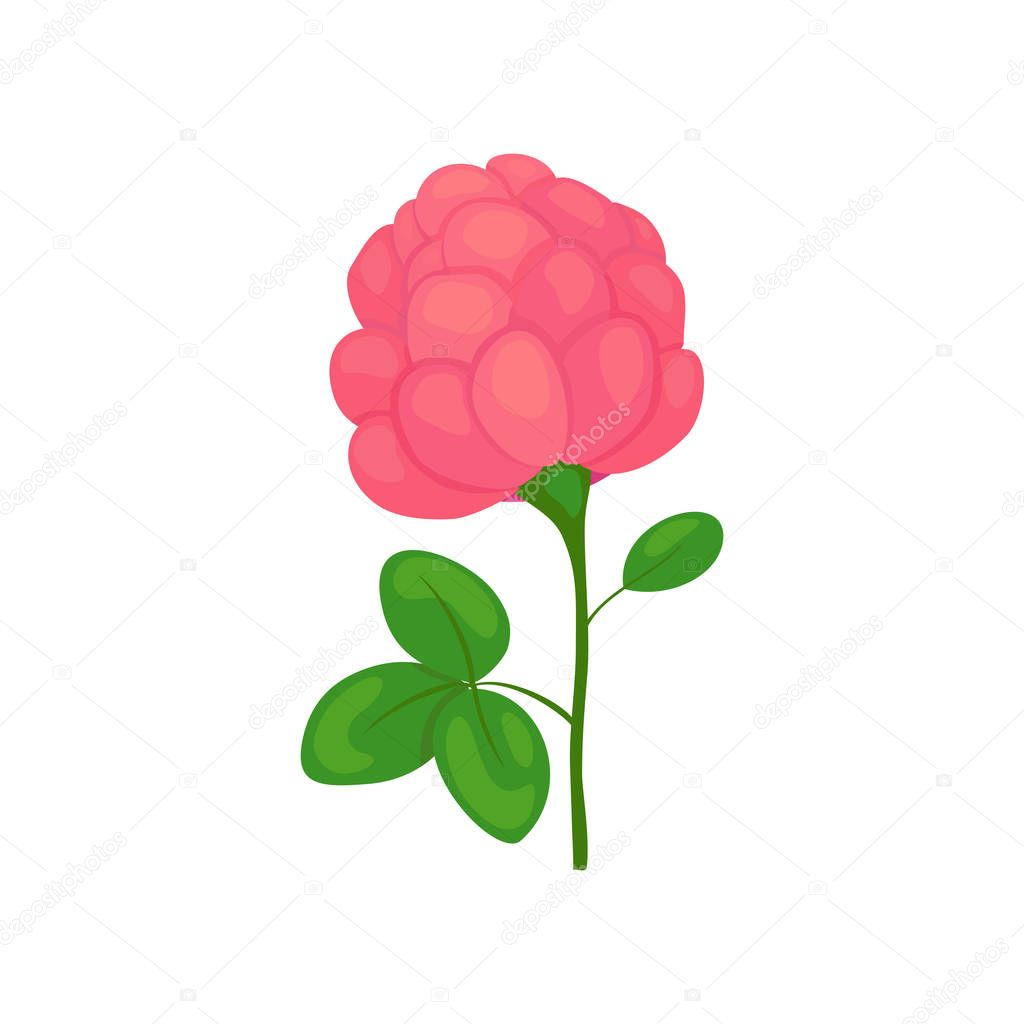 clover flower icon