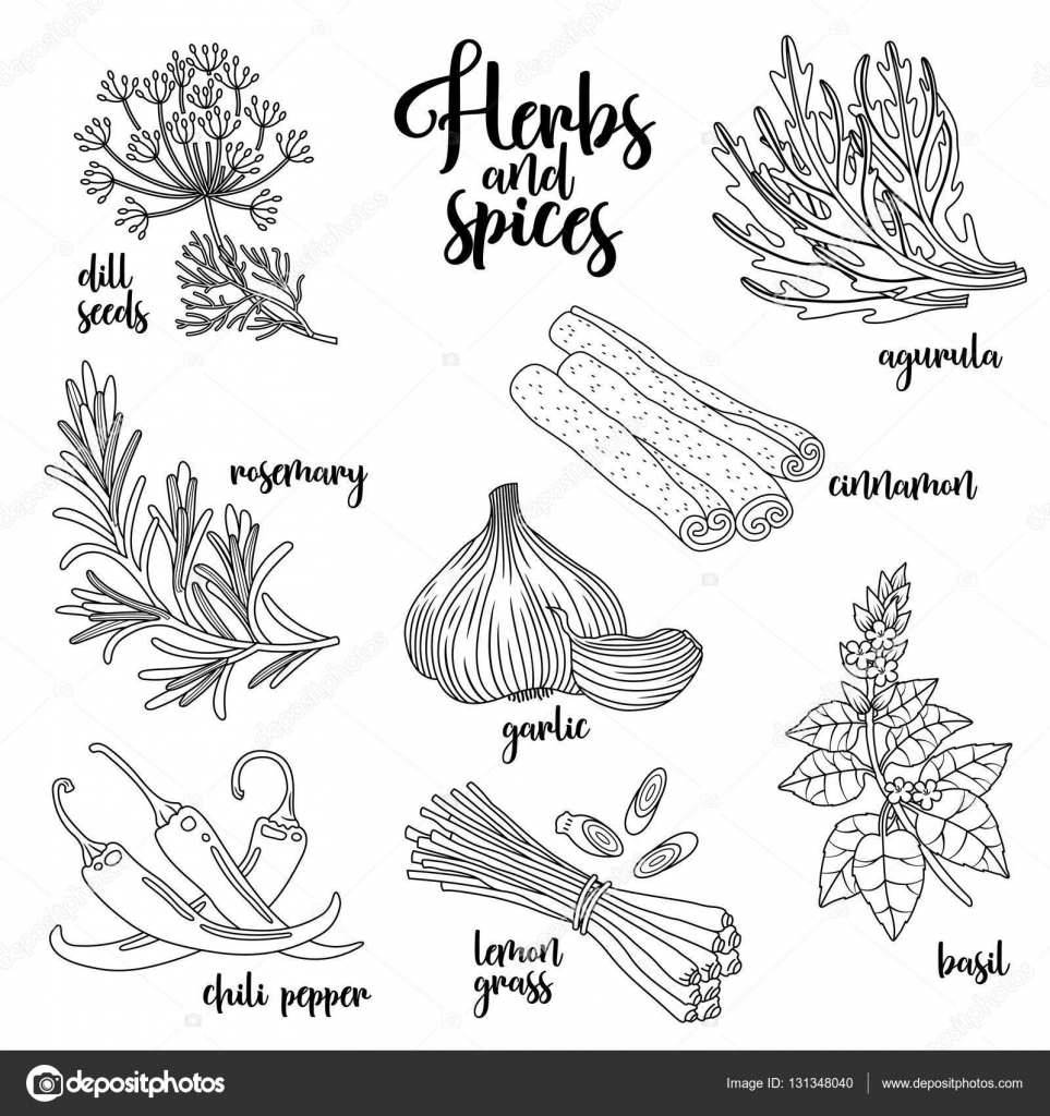 spices and herbs vector set  contour on white  u2014 stock