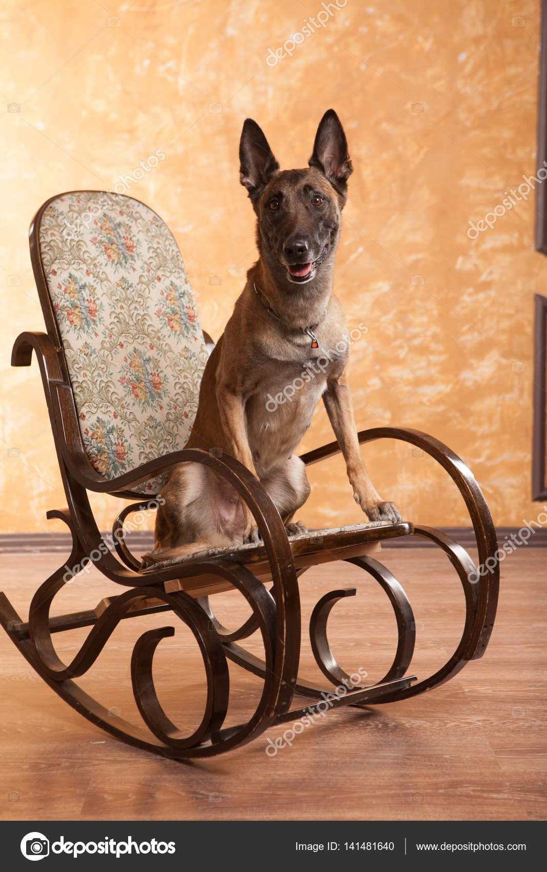 Remarkable Dog On The Rocking Chair Stock Photo C Logdog7 141481640 Squirreltailoven Fun Painted Chair Ideas Images Squirreltailovenorg