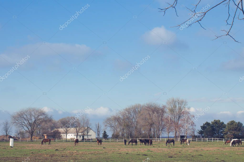 Herd of horses grazing on the green yard