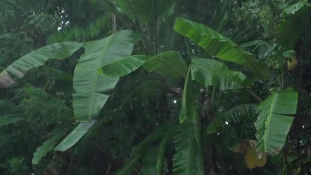 Lebensdschungel, Palmen, Naturphänomen, Tropen, tropischer Regen, Tierwelt