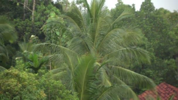 Životní džungle, palmy, přírodní fenomén, tropy, tropický déšť, zvířecí život